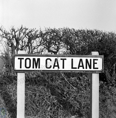 Tom Cat Lane, Sign, Bickerton
